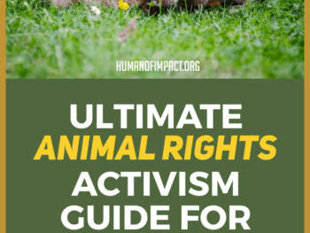Advocating for animals goes beyond diets. This guide will explain the details to you even if you are a beginner! Use this guide to learn about animal rights and how to help spread animal rights awareness. #animalquotes #advocate #activism #ethicalliving